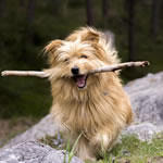 Online jigsaw puzzle - dog, cute dog