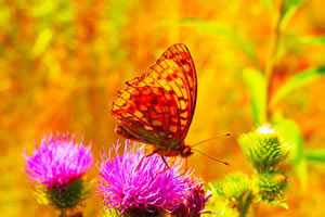 butterfly jigsaw puzzles - 24 jigsaws