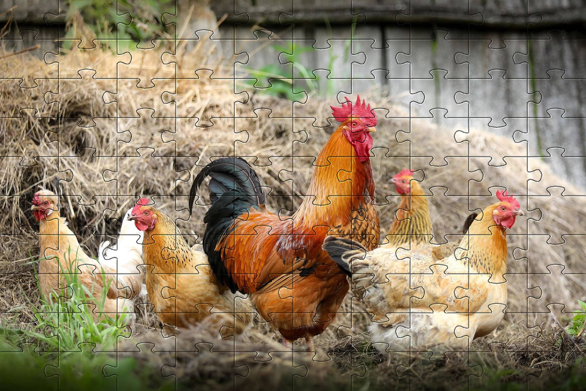 Free Baby Chickens Jigsaw | Print and Make your own Jigsaw