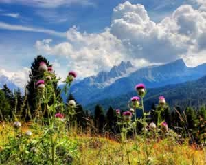 Croda da Lago, Dolomites Mountains - Scenery Jigsaw