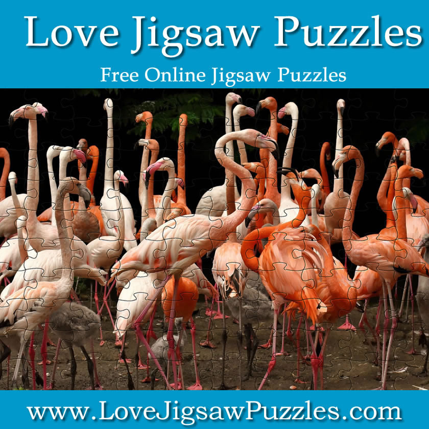 Free Flamingo Jigsaw Picture | Print and Make your own Jigsaw