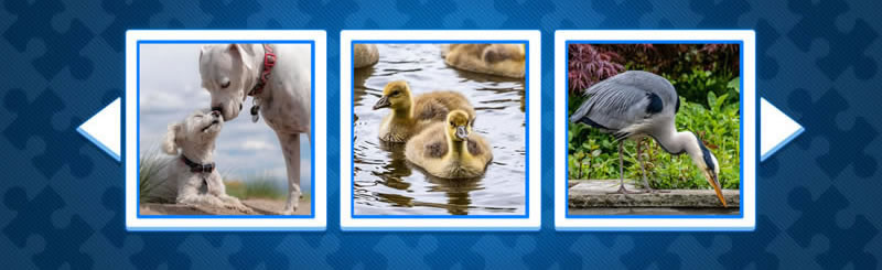 Play Game - Gratuit Puzzle of Dogs, birds and animals